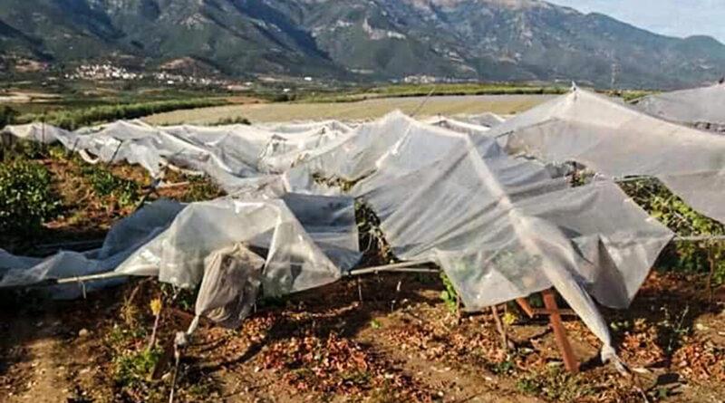 Άμεσα οι δηλώσεις για τις ζημιές στις καλλιέργειες του Παγγαίου ζητά ο δήμαρχος Παγγαίου Φίλιππος Αναστασιάδης